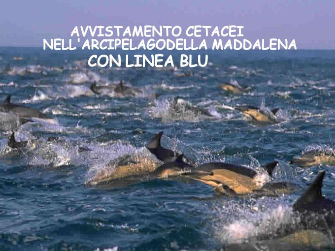 delfini-2567